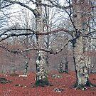 Behind the trees by TaniaLosada