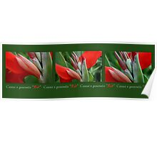 Canna Triptych Poster