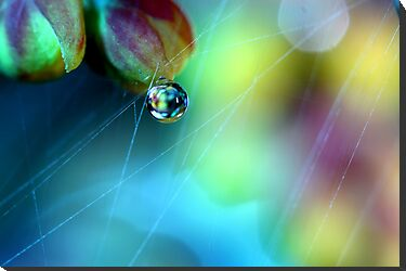 Rainbow Web by Sharon Johnstone