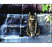 Cranky Devil Cat Photographic Print