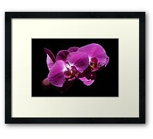 Pink Orchid Framed Print