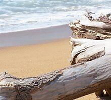 Driftwood - Stockton Beach by Penny McAlpine