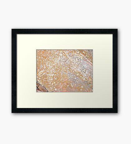 Sea Snail Meanderings  Framed Print