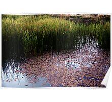 Wetland Reeds Poster