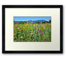Virginia's Blue Ridge in Bloom Framed Print