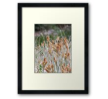 Dune Grasses - Fingal Bay Framed Print