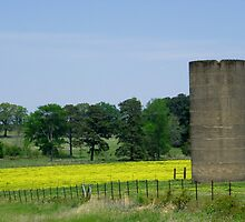 Silo in Yellow by BShirey