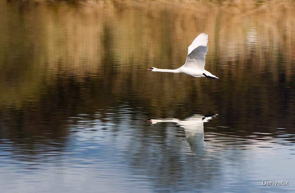 flight of the swan by Derivatix