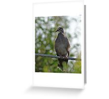 Common Bronzewing,Denmark West Australia Greeting Card