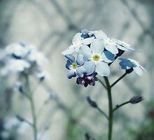 Ne m'oubliez pas by Mojca Savicki
