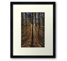 Sunbeams in the Forest Framed Print