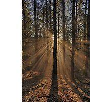 Sunbeams in the Forest Photographic Print