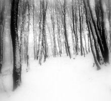 Light I by Anita Kovacevic