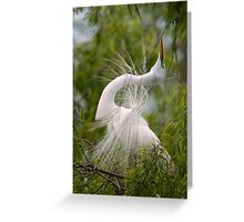 Great Egret in Courtship Dance Greeting Card