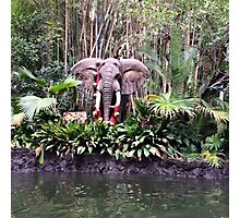 Jungle cruise elephants  Photographic Print