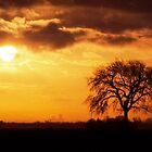 Lone Tree Cambridgeshire Fens by SteveDubois