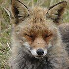 Fox by angeljootje