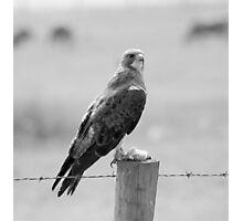 Hawk's dinner #2 Photographic Print