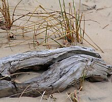 A Log In The Sand by starlitewonder