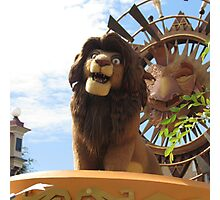 The lion king  Photographic Print