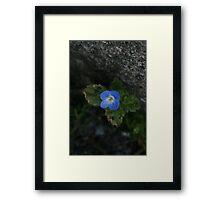 Tiny Blue Framed Print