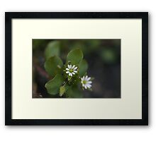 Daisy Like Framed Print