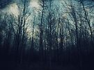 the woods by Angel Warda