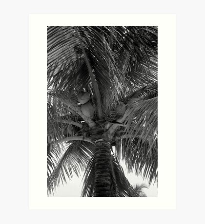 Key West Palm Art Print