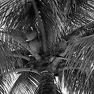 Key West Palm by AnalogSoulPhoto
