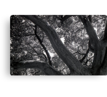 Showing strength to the sky Canvas Print