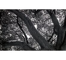 Showing strength to the sky Photographic Print