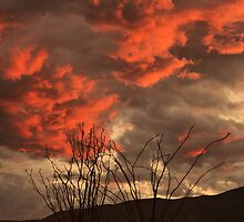 Ocotillo Fire by Erin Brown