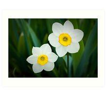 Poeticus Narcissus Art Print