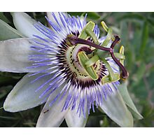 The Oddly Beautiful Passion Fruit Flower Photographic Print