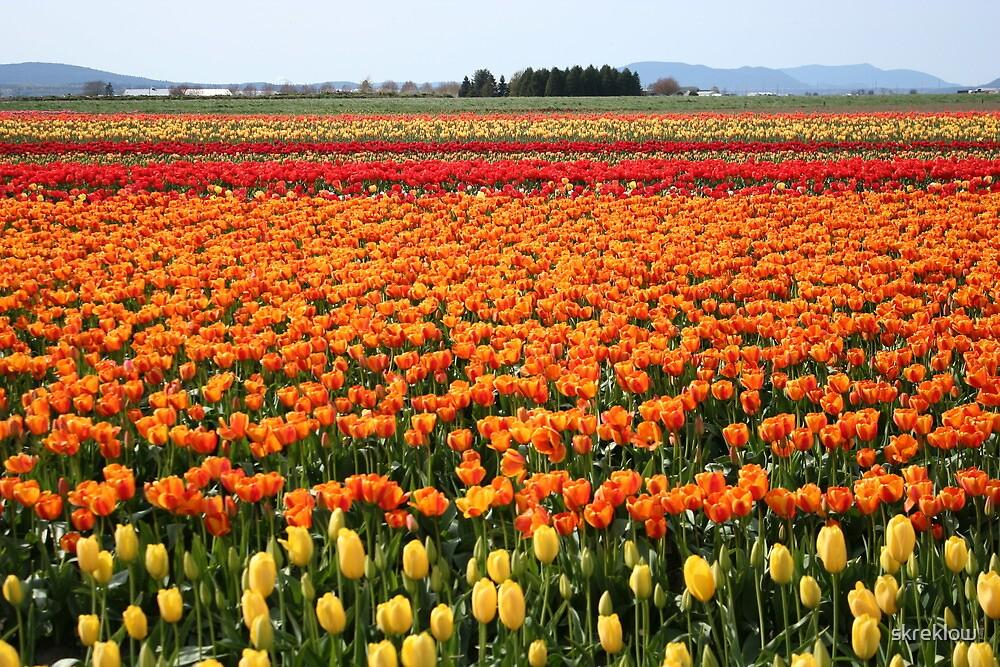 A field of Tulips by skreklow