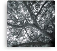 Holga looks to the sky through the trees Canvas Print