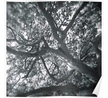 Holga looks to the sky through the trees Poster