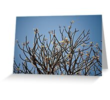Yellow Temple Trees Greeting Card