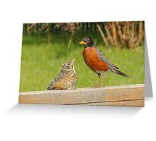 Robins Greeting Card