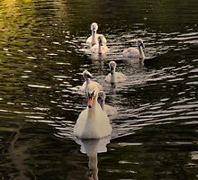 swan lake by joak