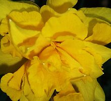 double daffodil by MichelleRees