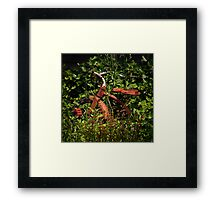 The Little Red Tricycle Framed Print