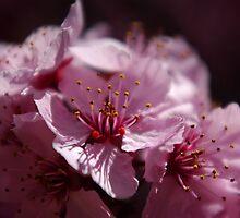 Sweet as Honey by Vicki Pelham