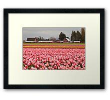 A Farm at Tulip Town, Skagit Valley Framed Print
