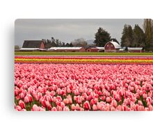 A Farm at Tulip Town, Skagit Valley Canvas Print