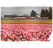 A Farm at Tulip Town, Skagit Valley Poster