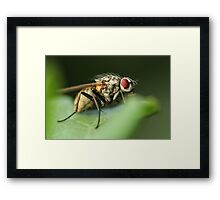 Fly on Leaf Framed Print