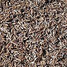 The beach - piles of shells by Marjolein Katsma