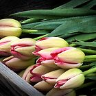 Tulips by Barb White