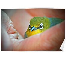 A bird in the Hand is worth two in the Bush Poster